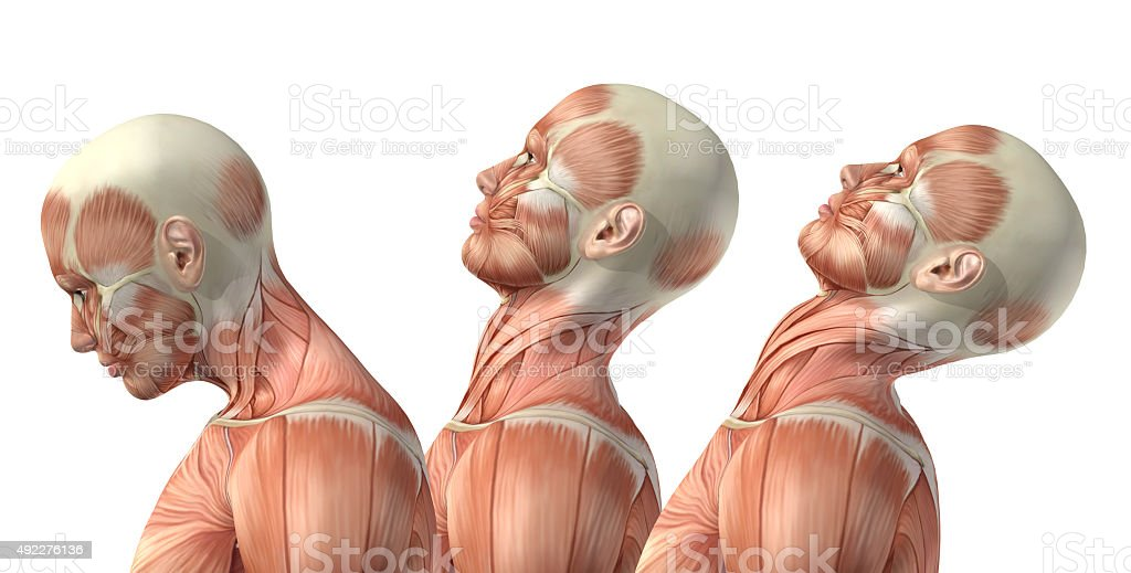 3D male medical figure showing cervical flexion, extension and h stock photo