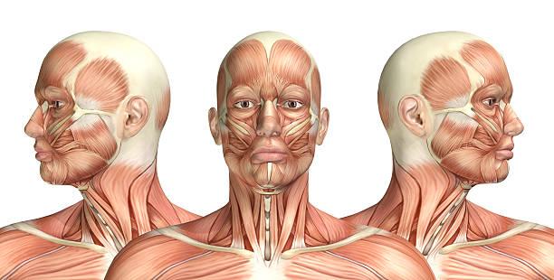 3 d homme montrant médical cervicales rotation figure - partie du corps humain photos et images de collection