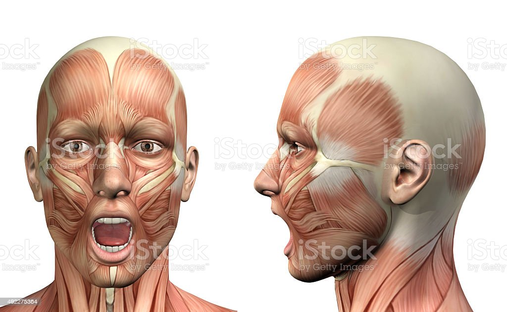 3D male medical figure showing mandible depression front and sid stock photo