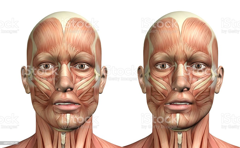 3D male medical figure showing mandible lateral deviation stock photo