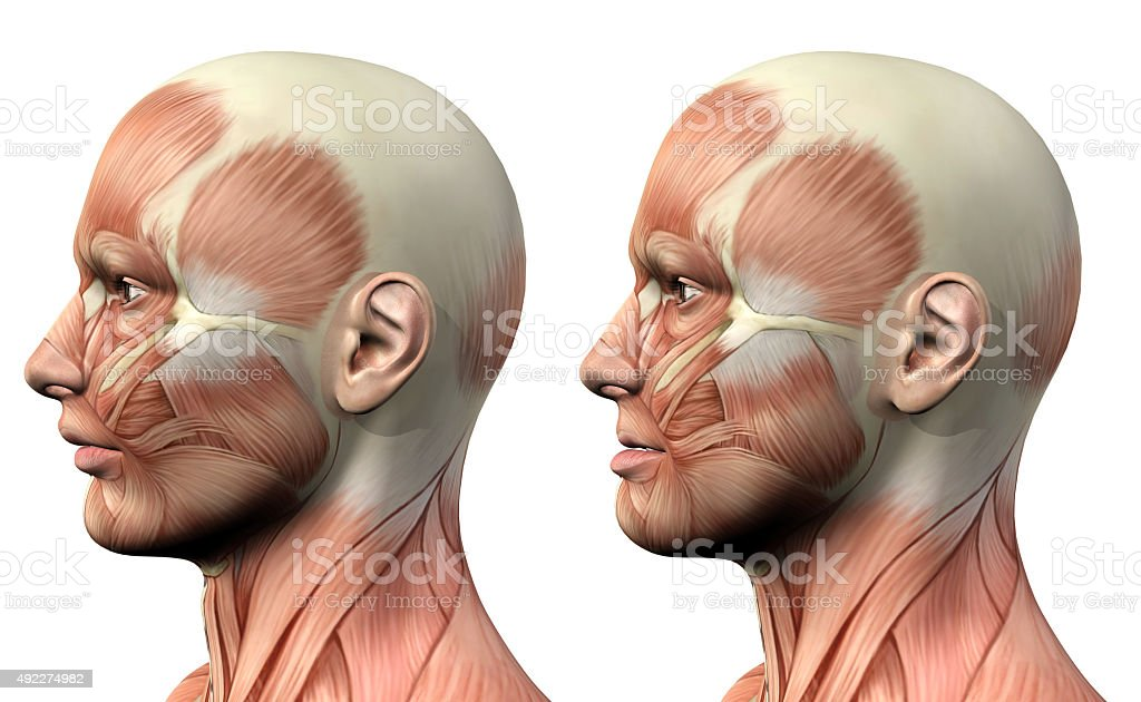 3D male medical figure showing mandible protusion and retrusion stock photo