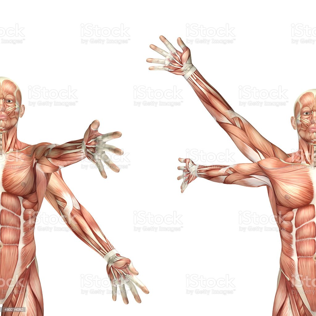 3d Male Medical Figure Showing Shoulder Circumduction Stock Photo