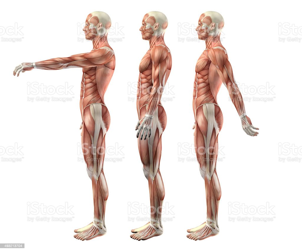 3D male medical figure showing shoulder flexion, extension and h stock photo