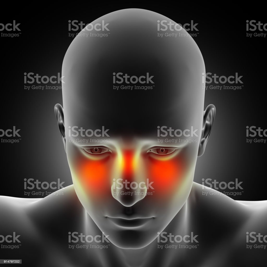 3D male medical figure with sinus pain highlighted stock photo