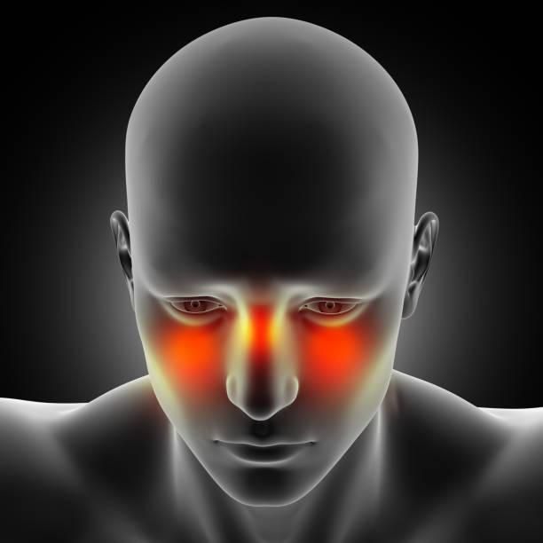 3d mannelijke medische figuur met sinus pijn gemarkeerd - bijholte stockfoto's en -beelden