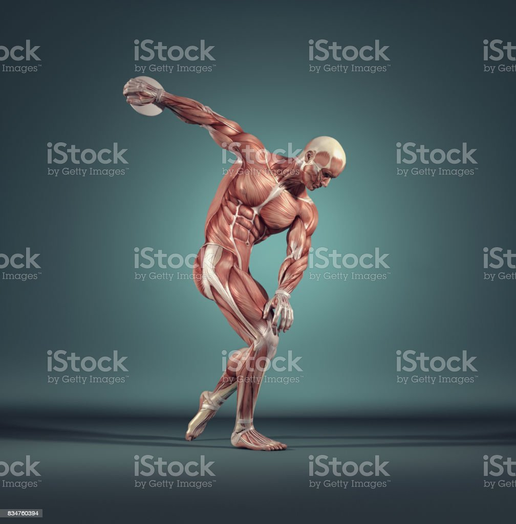 Male muscular system. stock photo