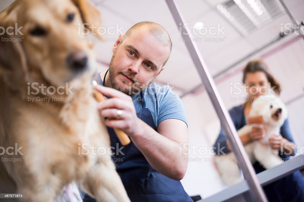 male pet grooming salon owner and staff stock photo