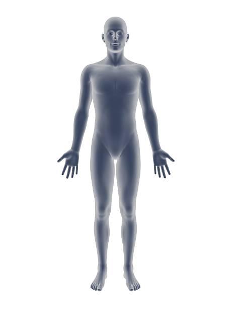 3 d macho - torso fotografías e imágenes de stock