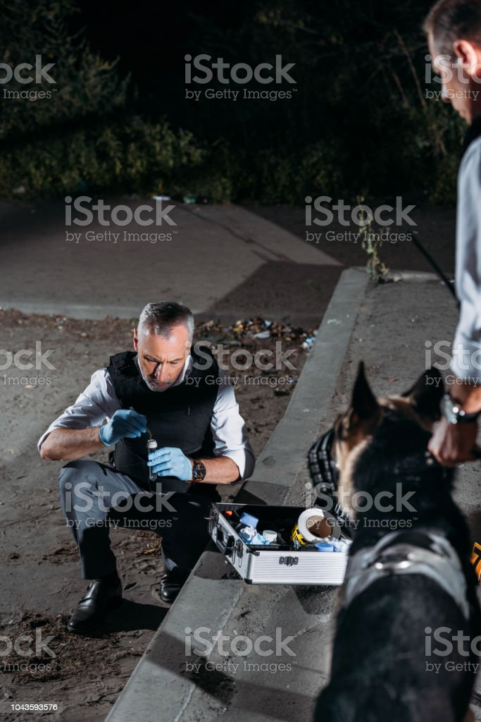 male police officer in latex gloves collecting evidence with case for investigation tools while his colleague standing with dog on leash at crime scene stock photo