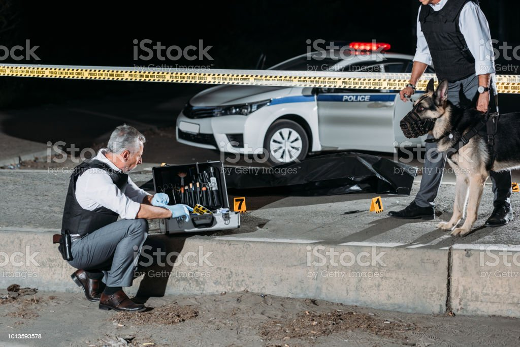 male police officer sitting near case for investigation tools while his colleague standing near with dog on leash at crime scene with corpse stock photo
