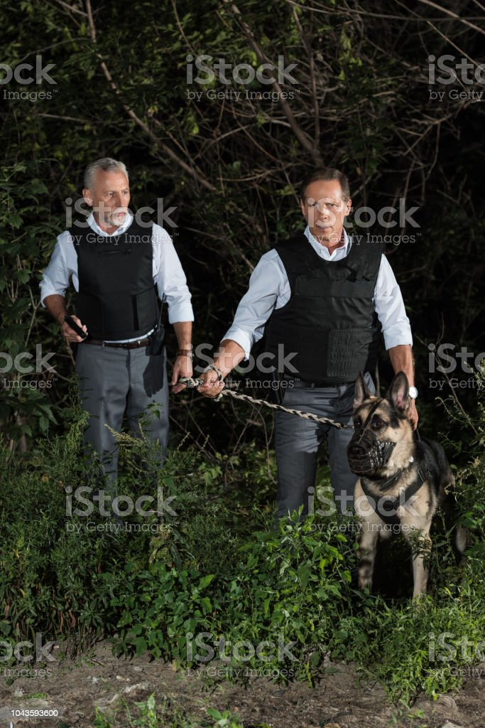 male police officers in bulletproof vests with german shepherd dog on leash near forest stock photo