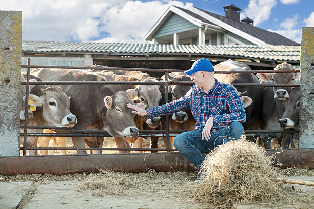 Male rancher in a farm Portrait Of Farmer With Cattle   rancher stock pictures, royalty-free photos & images