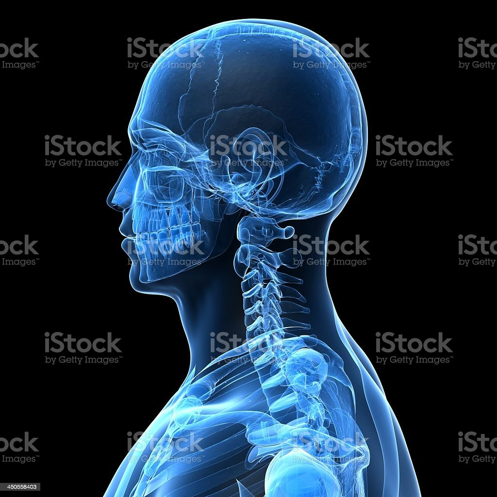 male skull stock photo
