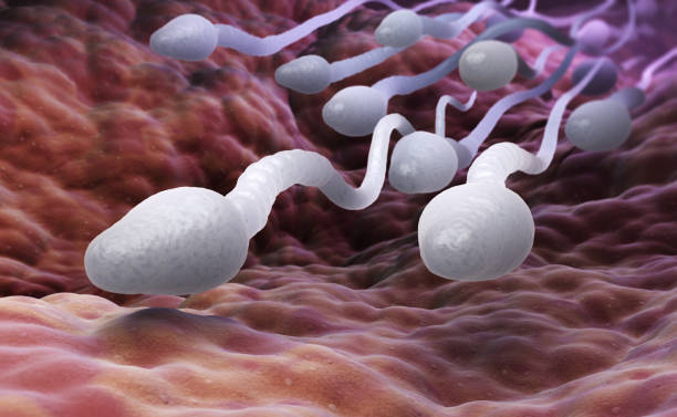 Male sperm cells stock photo