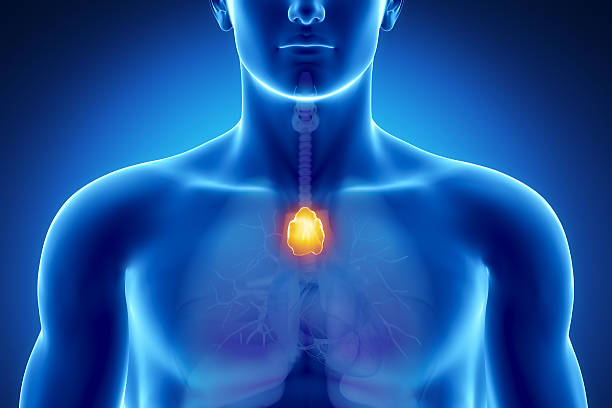 Male thymus anatomy Male anatomy of human organs in x-ray view janulla stock pictures, royalty-free photos & images
