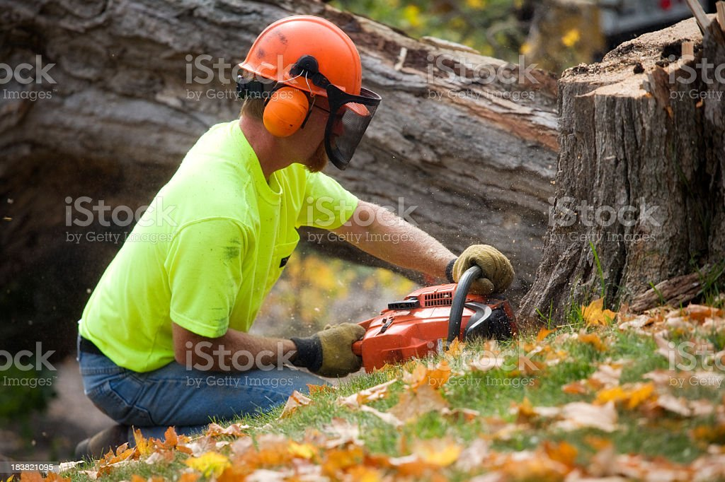 Male tree cutter using a chainsaw stock photo