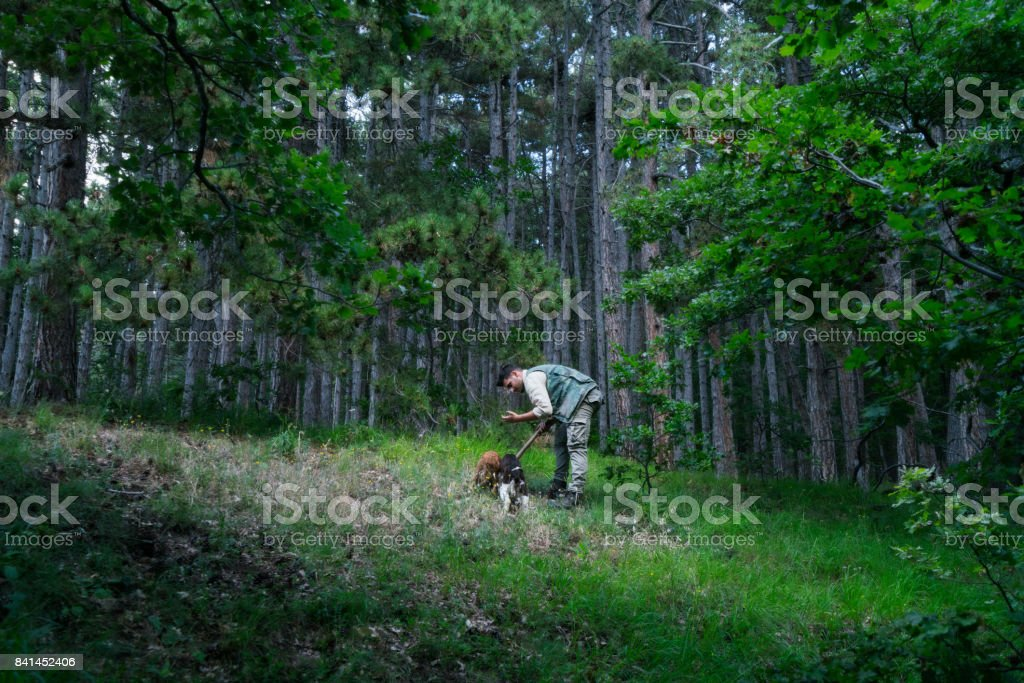Male truffle hunter in 20's collects truffles in the woods with his two dogs on a summer day, Abruzzo, Italy, Europe stock photo