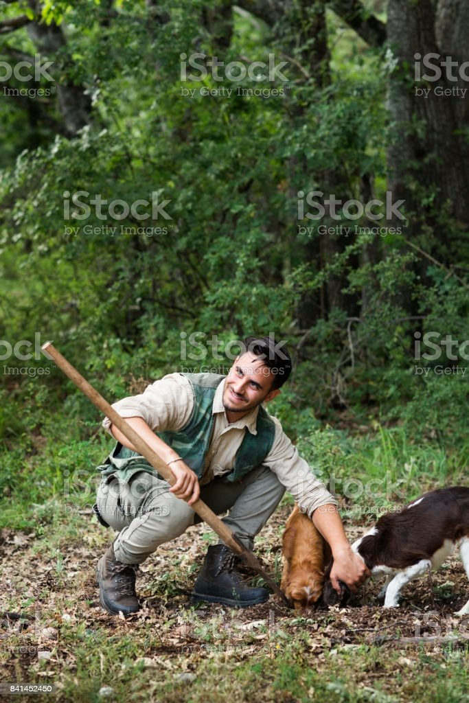 Male truffle hunter in 20's squats beside his two dogs that are sniffing and digging out truffles and assists with his vanghella tool in the woods on a summer day, Abruzzo, Italy, Europe stock photo