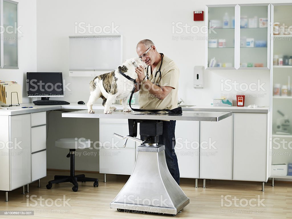 Male veterinarian examining bulldog in vet exam room royalty-free 스톡 사진