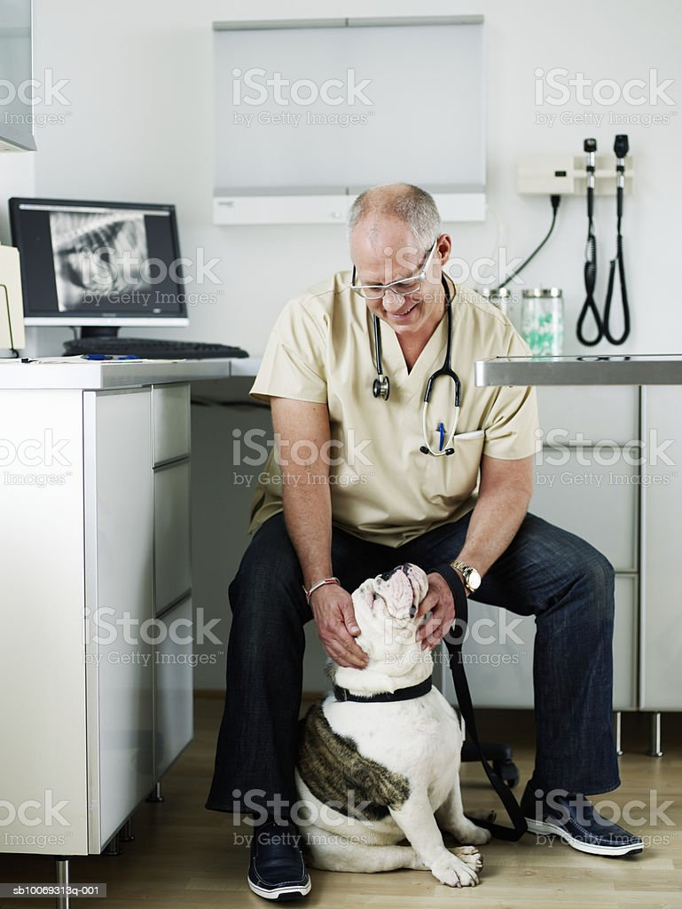 Male veterinarian with American bulldog in vet exam room, smiling royalty-free stock photo