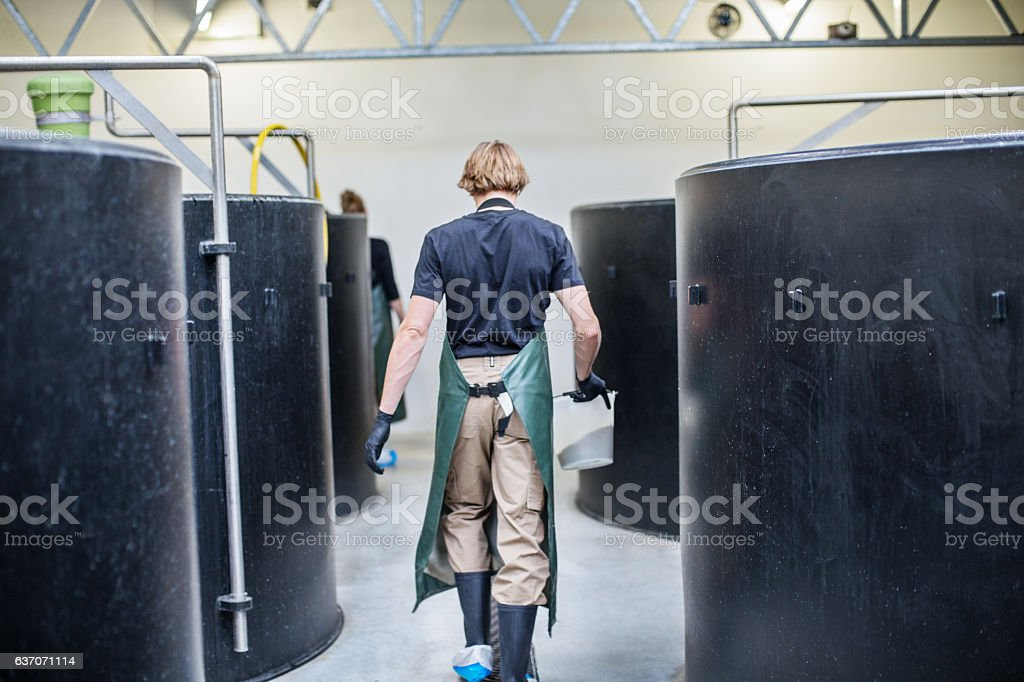 Male worker walking through hatchery tanks in fish farm stock photo