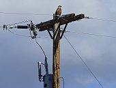 Southeast Oregon's High Desert.\nMalheur National Wildlife Refuge.\nNorthern Great Basin.\n\nAdult Ferruginous Hawk (Light Morph).\nButeo Regalis.