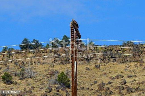 Southeast Oregon's Northern Great Basin. Malheur National Wildlife Refuge. Adult Golden Eagle.