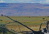 Southeast Oregon's Northern Great Basin.\nMalheur National Wildlife Refuge.\nA Peregrine Falcon At A Distance.