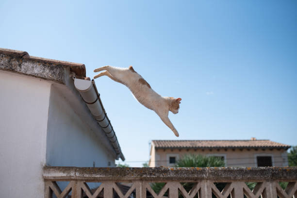 Mallorca cats picture id1168111768?b=1&k=6&m=1168111768&s=612x612&w=0&h=qgf1qpjzy tanhq3cw5lr8xl6gmky19sa 236ehfq2u=
