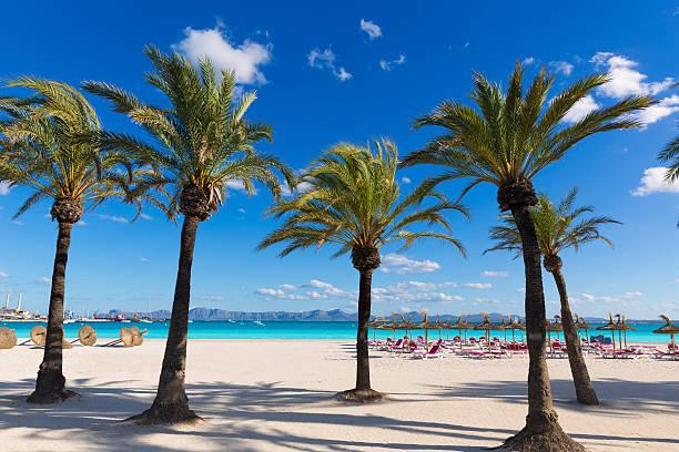 Majorque Platja de Alcudia Plage de Majorque - Photo