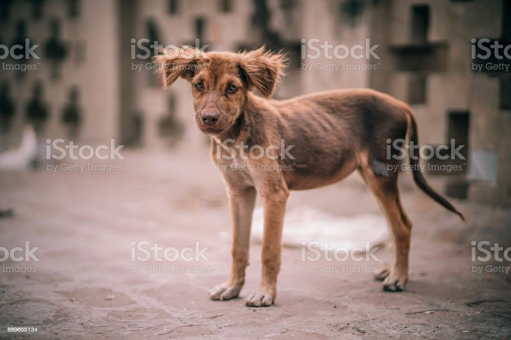 Malnourished Puppy stock photo