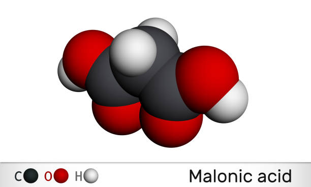 Malonic acid, dicarboxylic, propanedioic acid molecule. The ionized form its ester and salt, are known as malonate. Molecular model. Malonic acid, dicarboxylic, propanedioic acid molecule. The ionized form its ester and salt, are known as malonate. Molecular model. 3D rendering known gas stock pictures, royalty-free photos & images