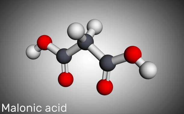 Malonic acid, dicarboxylic, propanedioic acid molecule. The ionized form its ester and salt, are known as malonate. Molecular model Malonic acid, dicarboxylic, propanedioic acid molecule. The ionized form its ester and salt, are known as malonate. Molecular model. 3D rendering known gas stock pictures, royalty-free photos & images