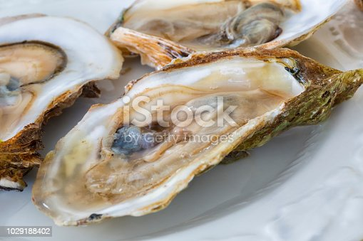 Raw Malpaque oysters on the shell.