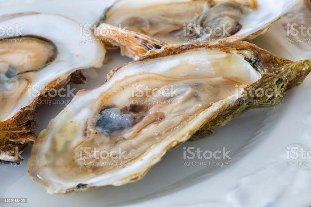 Malpaque Oysters stock photo