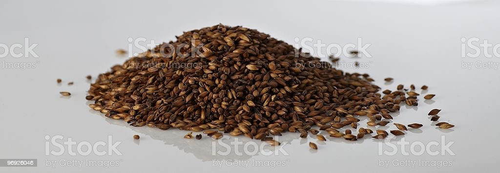 Malt for beer brewing royalty-free stock photo