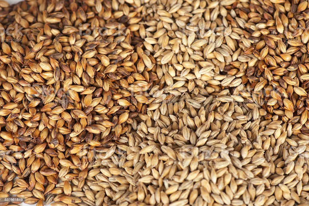 malt grains stock photo