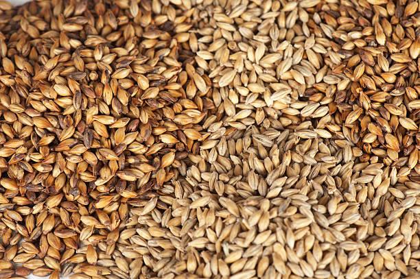 malt Getreide – Foto