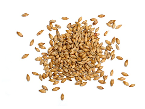 Malted barley photographed on a white background.  Malted barley is used in beer making as base malt to provide the bulk of the starches and sugars for fermentation.  Malted grains are also used in many baked products.