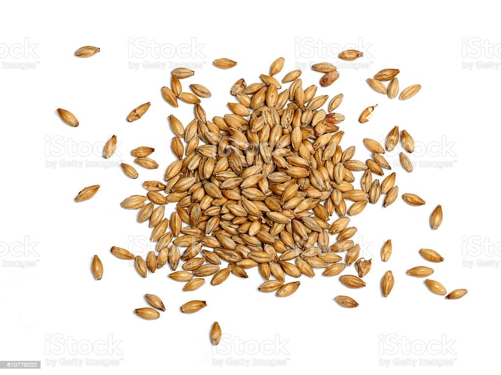 Malted Barley on White Background stock photo