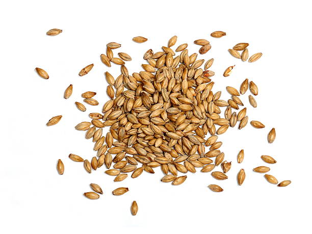 malted barley on white background - barley stock pictures, royalty-free photos & images