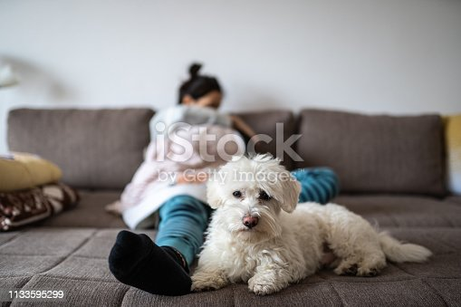 Cute little Maltese dog guarding owner and baby while mother holding newborn baby boy in arms, sitting in living room