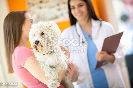 istock Maltese dog on exam in vet clinic 488108896