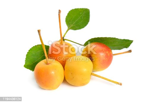 Malus baccata known by the common names Siberian crab apple, Siberian crab, Manchurian crab apple and Chinese crab apple. Isolated