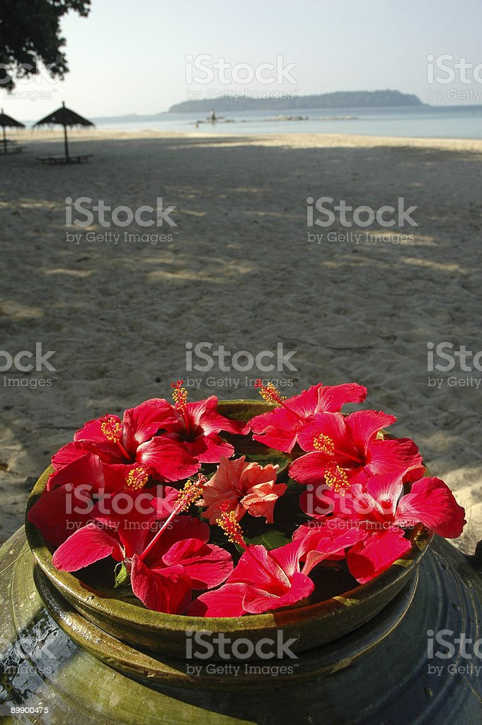 Malvaceae Hibiscus Flowers On A Beach royalty-free stock photo