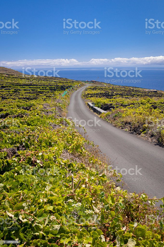 Malvasia vineyards at Fuencaliente stock photo