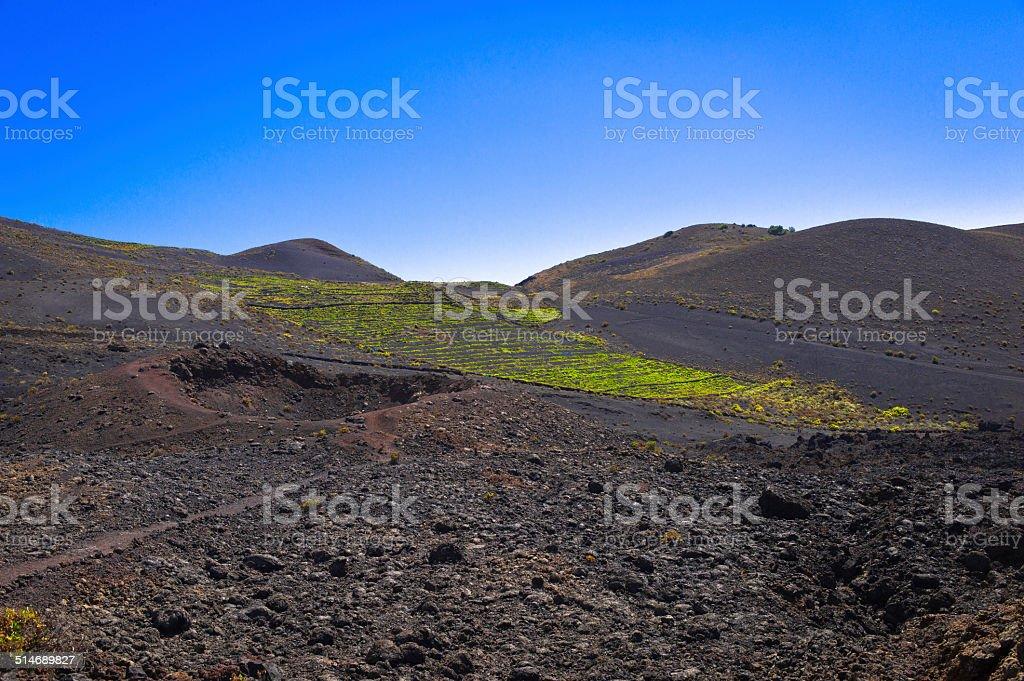 Malvasia vineyards at the foot of Teneguia volcano stock photo