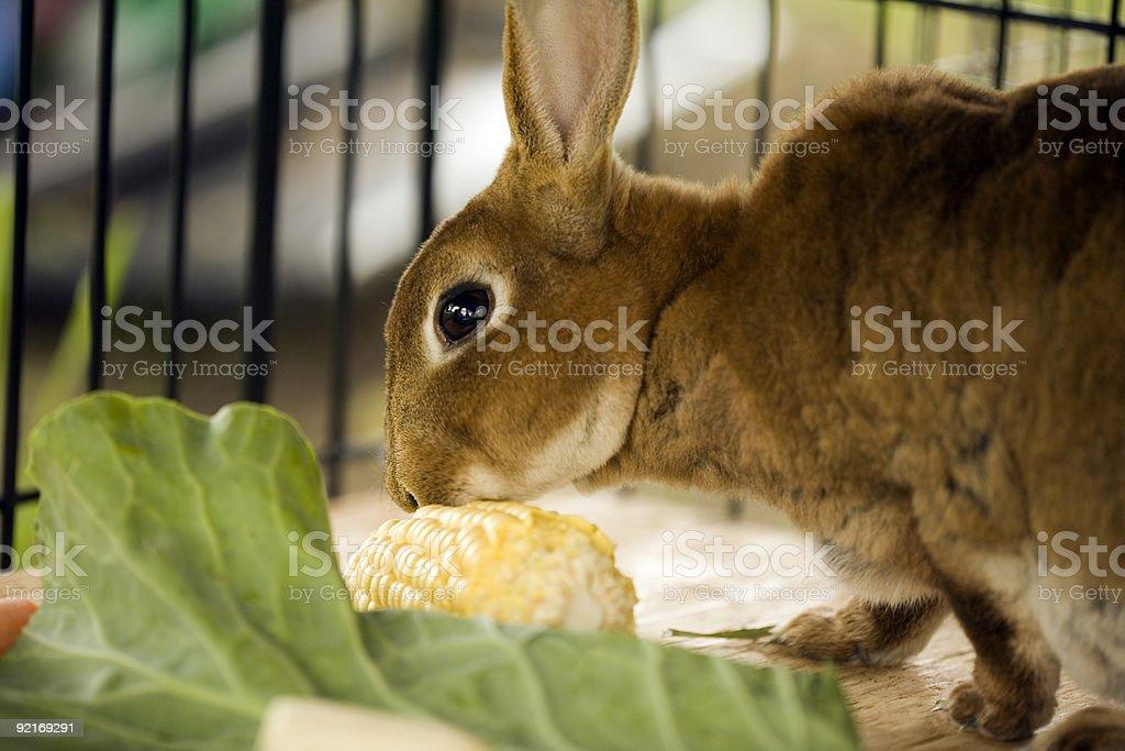 Mama Bunny royalty-free stock photo