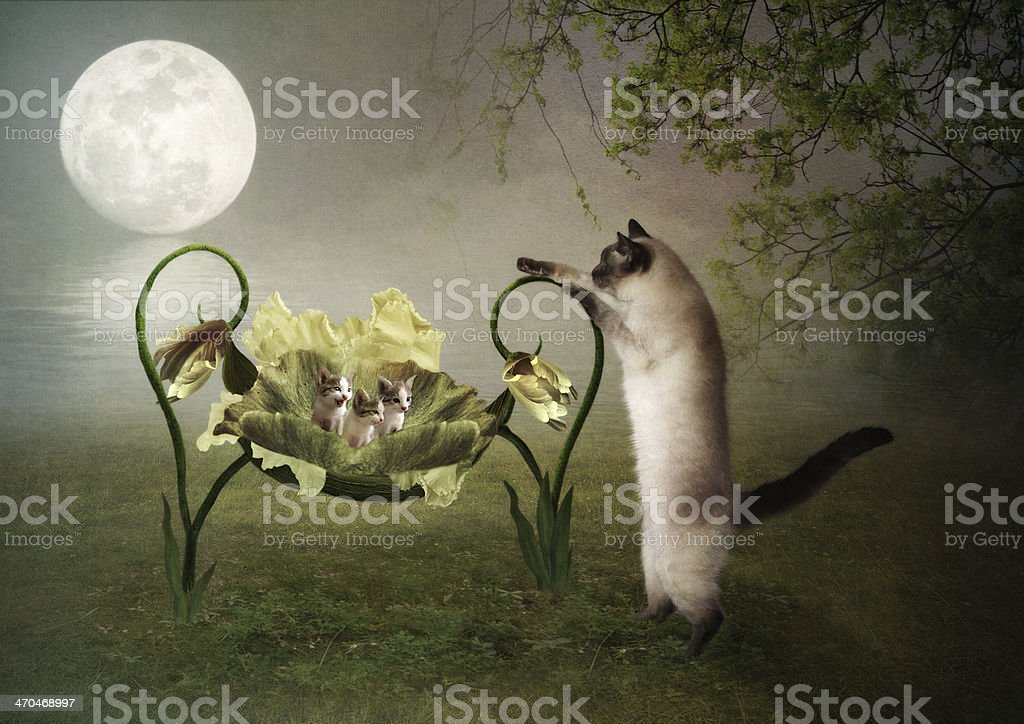 Mama cat lulls kittens stock photo