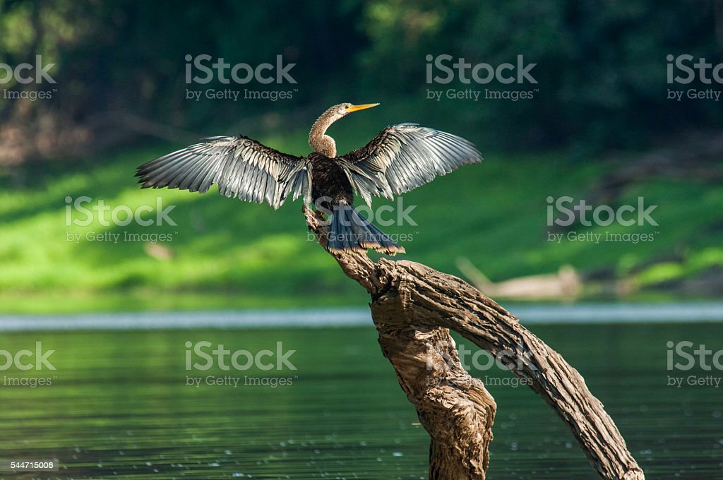 Mamiraua Reserve in the Brazilian Amazon, Brazil stock photo
